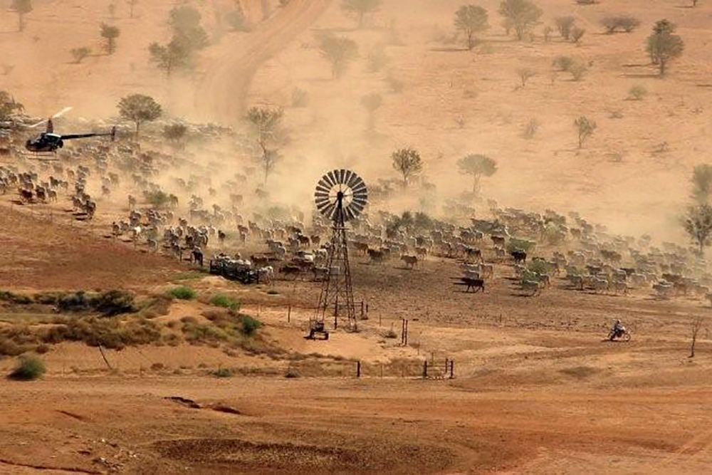 Feral-Animal-Control-and-Mustering---Queensland-helicopters